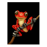 Cute Red Tree Frog on a Branch on Black Postcards