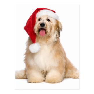 Cute Reddish Sitting Christmas Havanese Puppy Postcard