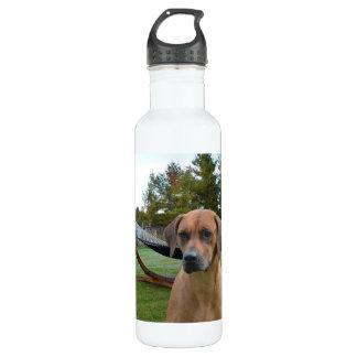 Cute Rhodesian Ridgeback 24oz Water Bottle