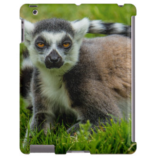 Cute ring tail lemur design products