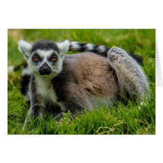 Cute ring tail lemur design products card