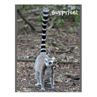 Cute Ring-Tailed Lemur Photo Postcard