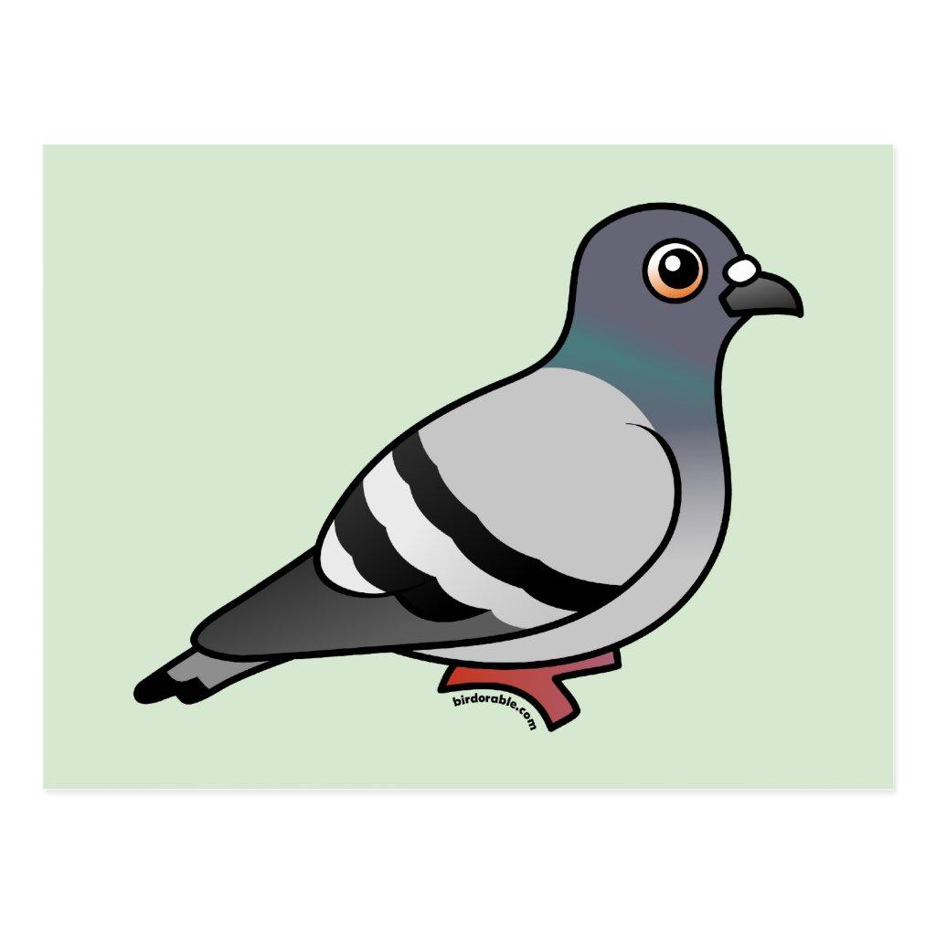 Cute pigeon