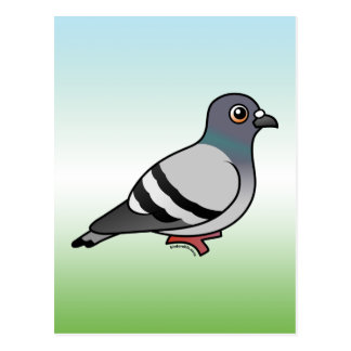 Cute Rock Pigeon Postcard