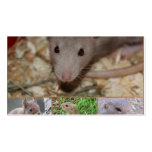 cute rodents business cards