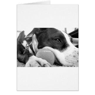 cute sad looking pitbull dog black white with ball card