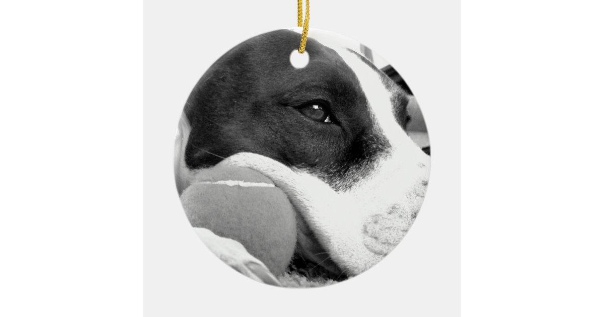 Cute Sad Looking Pitbull Dog Black White With Ball Ceramic