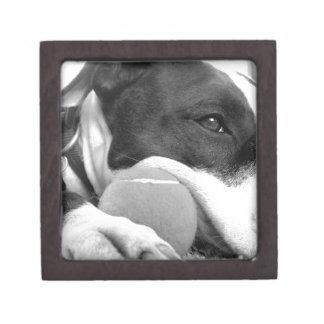 cute sad looking pitbull dog black white with ball keepsake box