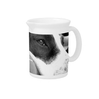 cute sad looking pitbull dog black white with ball pitcher