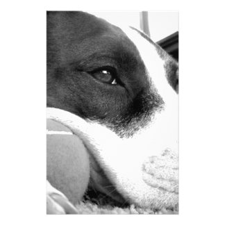 cute sad looking pitbull dog black white with ball stationery
