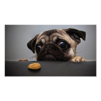 Cute Sad Pug And Cookie Poster