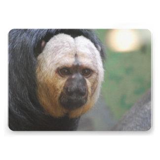Cute Saki Monkey Card