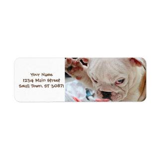 Cute Salute English Bulldog Puppy Label