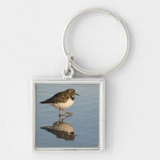 Cute Sandpiper Bird Keychain