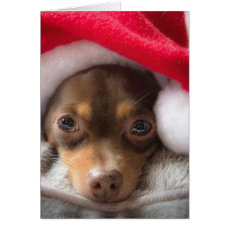 Cute Santa Chihuahua Feliz Navidad Card