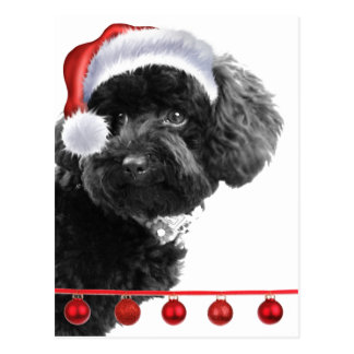 Cute Santa Dog l Holiday Custom Post Card