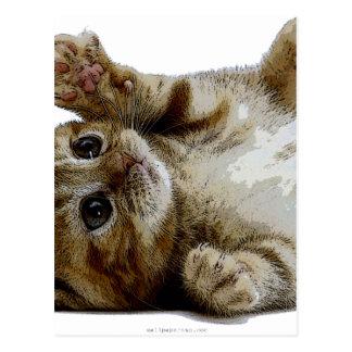 Cute save kitten postcard