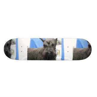 Cute Schnauzer Skateboard