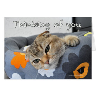 Cute scottish fold cat thinking of you card