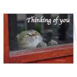 Cute Scottish Fold Cat thinking you pray card
