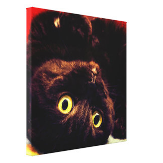 Cute Scottish Fold Munchkin Cat Canvas Print