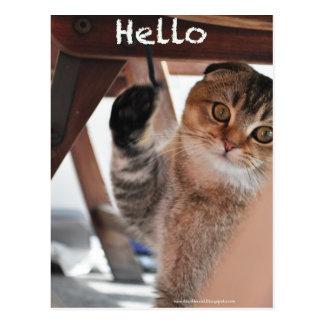 Cute Scottish fold noodles cat say hello postcard