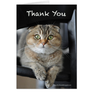 Cute scottish fold noodles cat thank you card