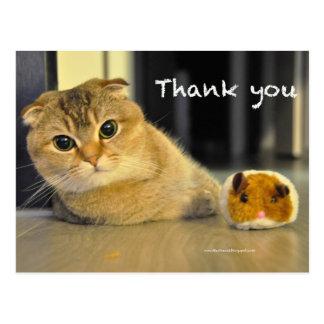 cute scottish fold noodles cat thank you postcard