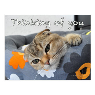 Cute scottish fold noodles cat thinking you card post card