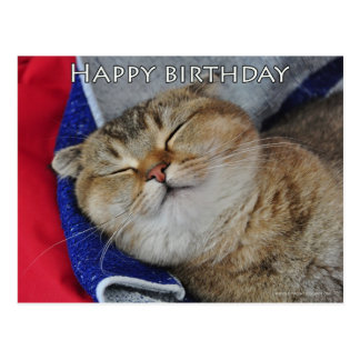 Cute Scottish fold Noodles funny cat birthday card Post Card