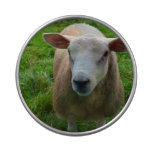 Cute Scottish Sheep Jelly Belly Tins
