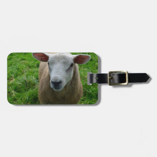 Cute Scottish Sheep Tag For Bags