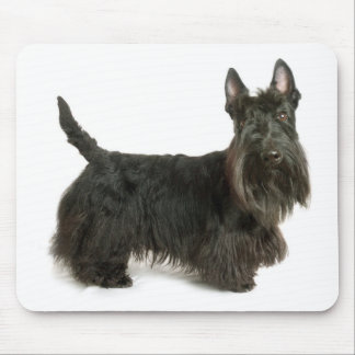 Cute Scottish Terrier Puppy Dog Mousepad