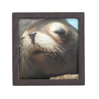 CUTE SEA LION JEWELRY BOX
