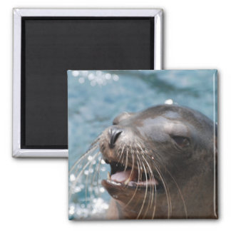 Cute Sea Lion Magnet