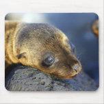 Cute Sea Lion Pup Mousepad