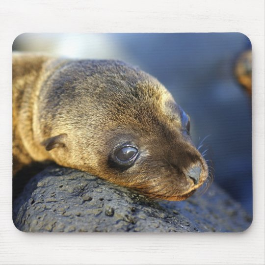 Cute Sea Lion Pup Mousepad