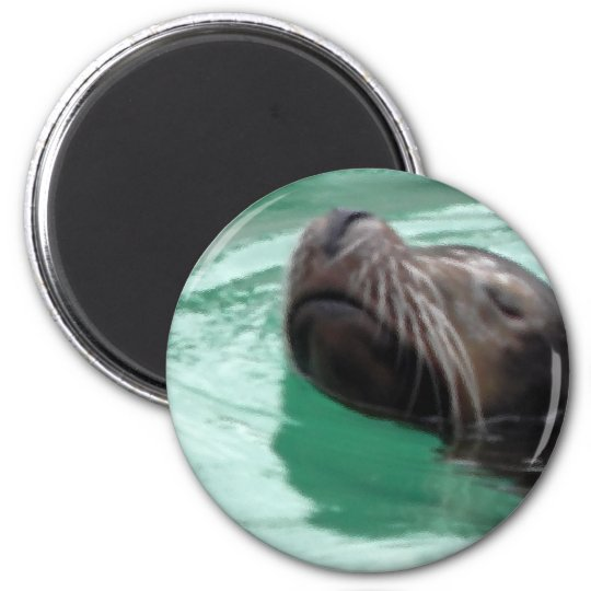 Cute Sea Lion Swimming Magnet