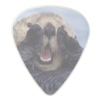 Cute Sea Otter   Alaska, USA Acetal Guitar Pick