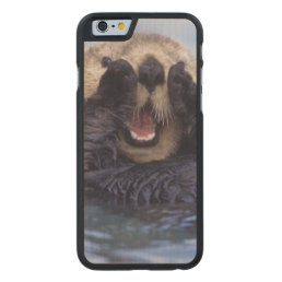 Cute Sea Otter | Alaska, USA Carved Maple iPhone 6 Slim Case