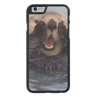 Cute Sea Otter | Alaska, USA Carved Maple iPhone 6 Slim Case