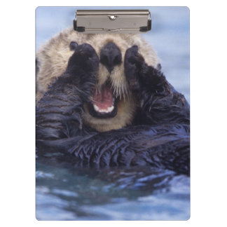 Cute Sea Otter   Alaska, USA Clipboard