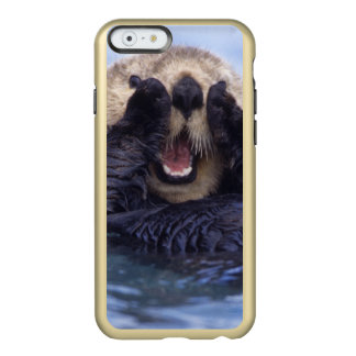 Cute Sea Otter | Alaska, USA Incipio Feather Shine iPhone 6 Case