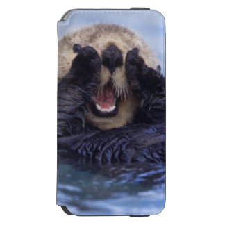 Cute Sea Otter | Alaska, USA iPhone 6/6s Wallet Case
