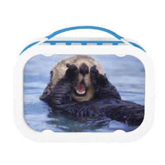 Cute Sea Otter   Alaska, USA Lunch Box