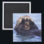 "Cute Sea Otter   Alaska, USA Magnet<br><div class=""desc"">NA,  USA,  Alaska Sea otters are the largest members of the weasel family in North America � Daisy Gilardini / DanitaDelimont.com</div>"