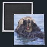 "Cute Sea Otter | Alaska, USA Magnet<br><div class=""desc"">NA,  USA,  Alaska Sea otters are the largest members of the weasel family in North America � Daisy Gilardini / DanitaDelimont.com</div>"