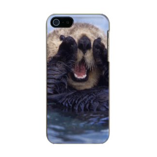 Cute Sea Otter   Alaska, USA Metallic Phone Case For iPhone SE/5/5s