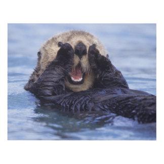 Cute Sea Otter   Alaska, USA Panel Wall Art