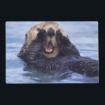 "Cute Sea Otter | Alaska, USA Placemat<br><div class=""desc"">NA,  USA,  Alaska Sea otters are the largest members of the weasel family in North America � Daisy Gilardini / DanitaDelimont.com</div>"